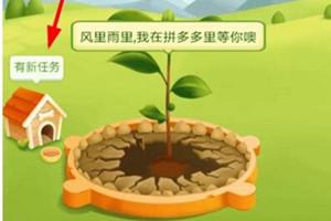 拼多多种树,拼多多种树领水果要多久